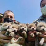 Anneleri ölen 5 yavru tilki, bakıma alındı