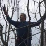 BBP Genel Başkanı Destici hafta sonu kısıtlamasında ağaç budadı