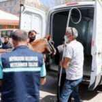 Erzurum'da trafikteki at araçlara çarptı!