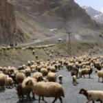 Hakkari'de yayla göçü