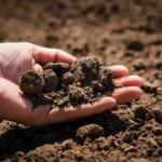 Rüyada toprak eşelemek ne demek? Rüyada toprak kayması neye işarettir?