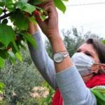 Şehri bıraktı köyde kurduğu çiftlikle Avrupa'ya ihracata başladı