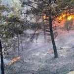 Muğla Ortaca'da korkutan yangın!