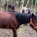 Adalar'daki atların 224'ü bakımsızlık yüzünden ölmüş