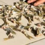 Cumhurbaşkanı Erdoğan imzaladı! Balon balığı avlayanlara 2.5 milyon lira ödenecek