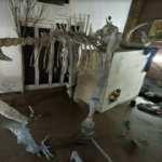 Google Haritalar'da keşfedilen ilginç oda: Dinozor iskeleti ve garip eşyalar var
