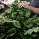 Günde bir porsiyon nitrat zengini sebze tüketmek kalp hastalığı riskini azaltabilir