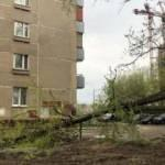 Moskova'da şiddetli rüzgar 56 ağacı devirdi