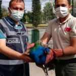 Tavus kuşu çalanlar yakalandı