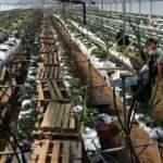 Topraksız tarımla ile yılın 12 ayı üretim yapıyor