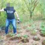 Başkasına ait bahçedeki kenevirlerini suluyordu! Jandarma suçüstü yakaladı