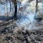 Denizli'deki orman yangınıyla ilgili 2 kişi gözaltına alındı