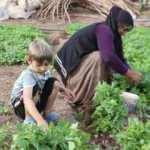 İmece usulü yılda yaklaşık 20 milyon sebze fidesi üretiyor
