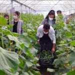 Mardin'de lise öğrencileri 2 bin metrekarelik alanda tarımsal üretim yapıyor