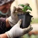 Pandemide balkonda sebze yetiştirme ilgisi arttı! En çok yetiştirilen...