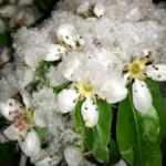 Şavşat'ta Mayıs ayında kar güzelliği