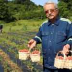 Padişah meyvesinde 2 ton hasat bekleniyor