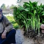 Konya'da anne ve kızları ata tohumuyla fide üretiyor, taleplere yetişemiyor