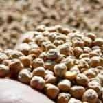 Bitkisel üretimden kötü haber: Tahıllar ve sebzelerde üretim düşecek