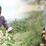 Burdur'da hobi olarak gül yetiştiriyordu, yağının gramını 100 liradan satıyor!