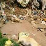 Çöplükte 17 köpek ölüsü bulundu