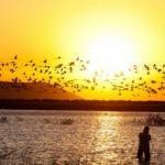 Konya'nın kuş cenneti Akgöl Sazlıkları binlerce flamingoyu ağırlıyor