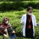 """Sağlık çalışanlarının Doğu Karadeniz'in zorlu coğrafyasında """"aşı"""" mesaisi sürüyor"""