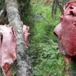 Trabzon'dan korkunç görüntüler! Ağaçlara et astılar