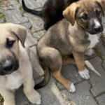 Vicdansızlığın böylesi! Yavru köpekler katledildi