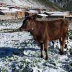 Rize'de yaz ayında kar sürprizi