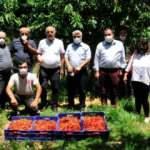 Antalya'da 17 yıl önce dikilen fidanlar, ihracat kapısı oldu