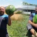 Antalya'da 15 kilogramlık karpuzlarla dünya şampiyonasına hazırlanıyor