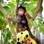 Annesi yavru maymunu kabul etmedi!