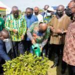 Gana bir günde 5 milyon fidan dikti