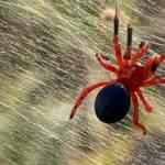 Avusturalya'da selden sonra ortaya dev örümcek ağları çıktı