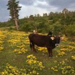 Gözde doğa turizmi rotası Kastamonu'da görsel şölen