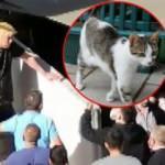 Kedi yediğini itiraf eden Japon İl Göç İdaresi'ne teslim edildi