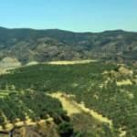 Madeni sahası tarım arazisine dönüştürüldü, dünyaya satılıyor