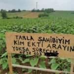 Bursa'da bir garip olay! Tarlasına izinsiz ekim yapanları arıyor