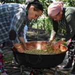 Karadenizli kadınlar geleneksel dut pekmezi yapımına başladı