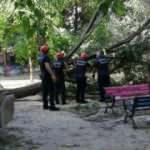 Bakırköy'de çocuklar oynarken ağaç devrildi