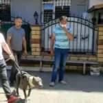 Küçük çocuğa saldıran pitbullun sahipleri hakkında karar verildi