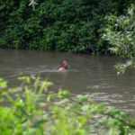 Nehirde akıntıya kapılan genci arama çalışmaları sürüyor