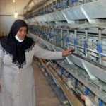 Tavukları ölen kadın girişimciye 5 bin hayvanla destek