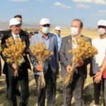 Şırnaklı çiftçilerin aspir heyecanı: Buğday ve arpadan iki kat daha verimli