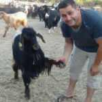 Beslediği keçi ile yaptığı pazarlık gülümsetti!