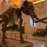2 milyon yıllık Güney Fili Burdur'da sergileniyor