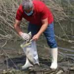 Alibeyköy Barajı'nda balık ölümlerine inceleme