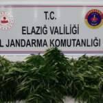 Elazığ'da uyuşturucu operasyonu! Bir gözaltı