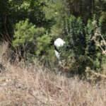 Antalya'da otomobil şarampole yuvarlandı: 4 Rus yaralı